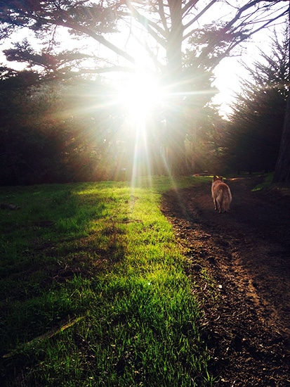 Golden-Gate-Park-Sun-Beam-Roo